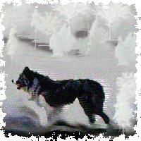 Candy Kennedy training Border Collies « Training Border Collies